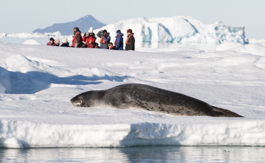 PLA30-19, DAY 8-18 MAR Leopard_Seal - Oceanwide Expeditions.jpg