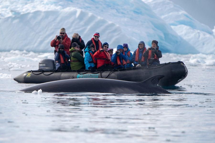 Fin whale & zodiac, Antarctica, February © Pedro Rego-Oceanwide Expeditions.jpg