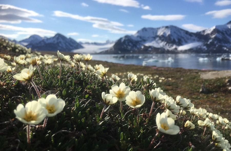 St Jonsfjord and Alkhornet