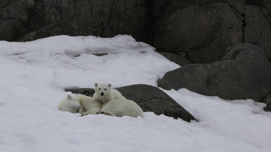 Hindlopen Strait, Alkefjellet and Polar bears