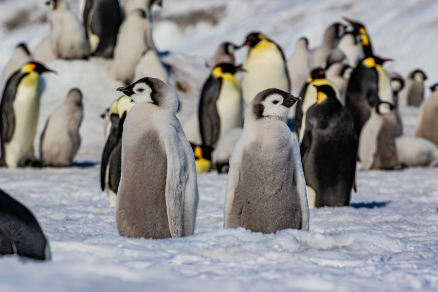 Visiting the Emperor penguins