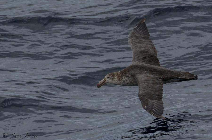 At Sea, Drake Passage towards Antarctica
