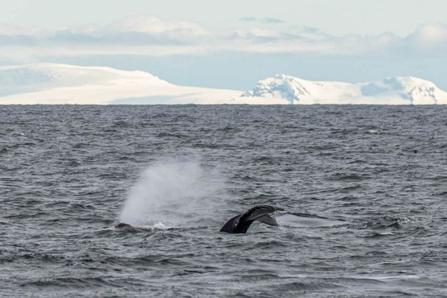 At Sea towards the Antarctica Peninsula