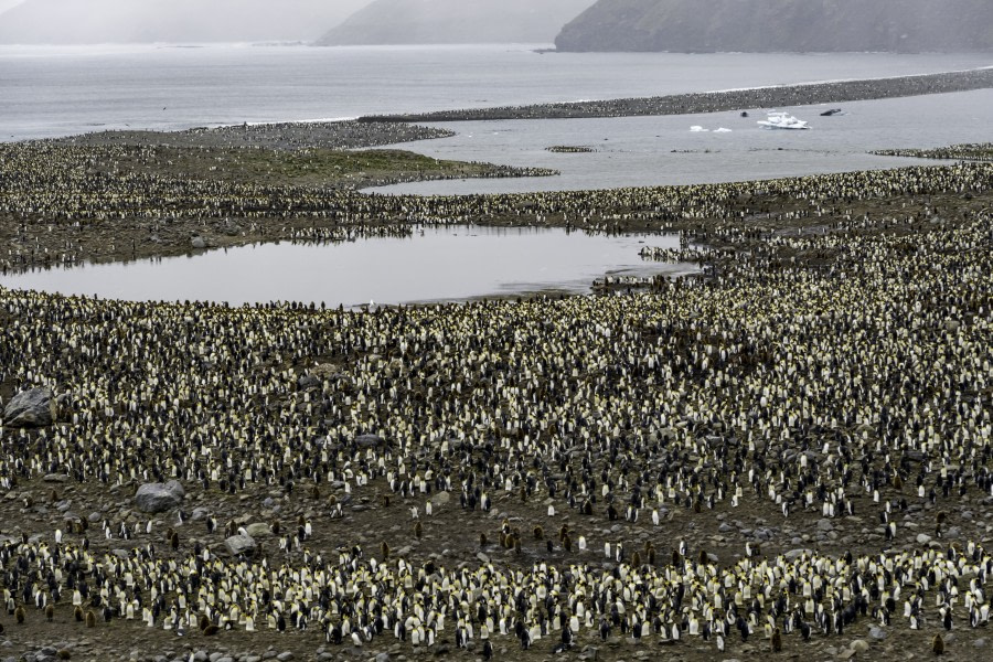 St. Andrews Bay – Grytviken