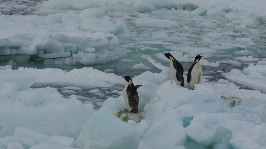 off Wood Bay, Victoria Land, Ross Sea