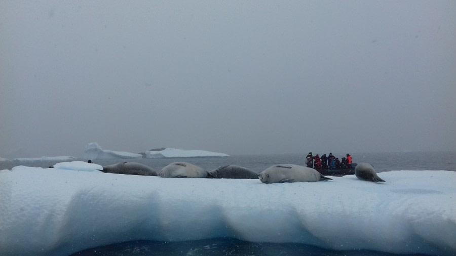 Detaille Island / Polar Circle