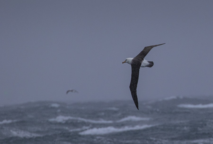 At sea: The Southern Ocean