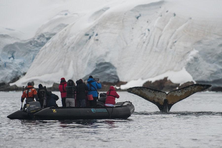Zodiac cruising in Antarctica © Morten Skovgaard Photography - Oceanwide Expeditions (14).jpg