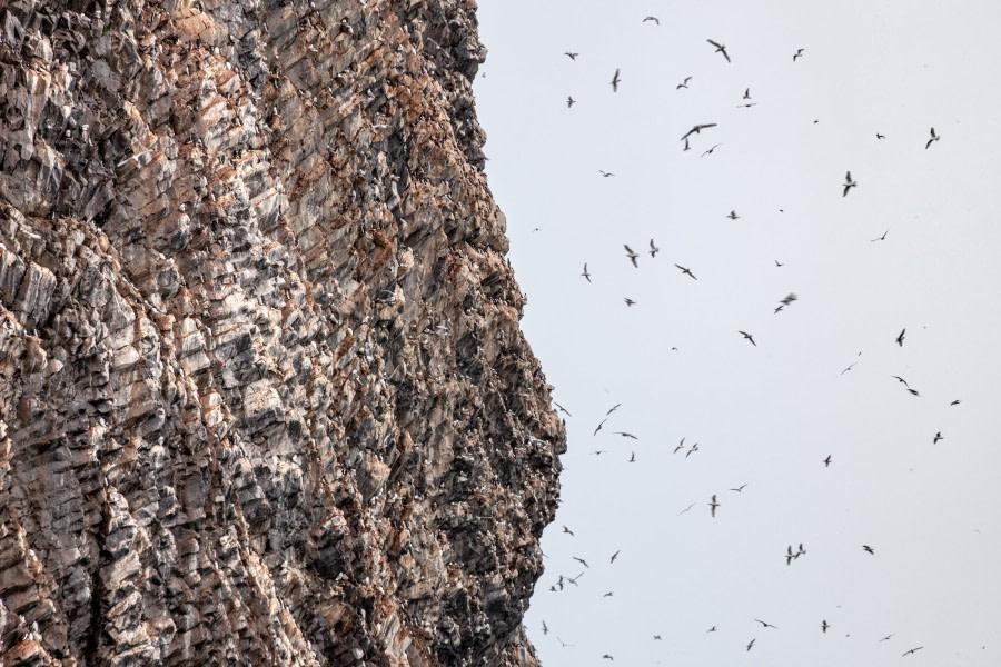 Rubini-Rock-bird-cliff-v1.jpg