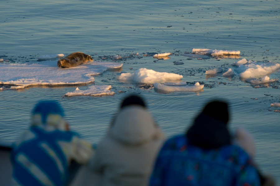Passengers observing a bearded seal © Zout Fotografie - Oceanwide Expeditions.JPG