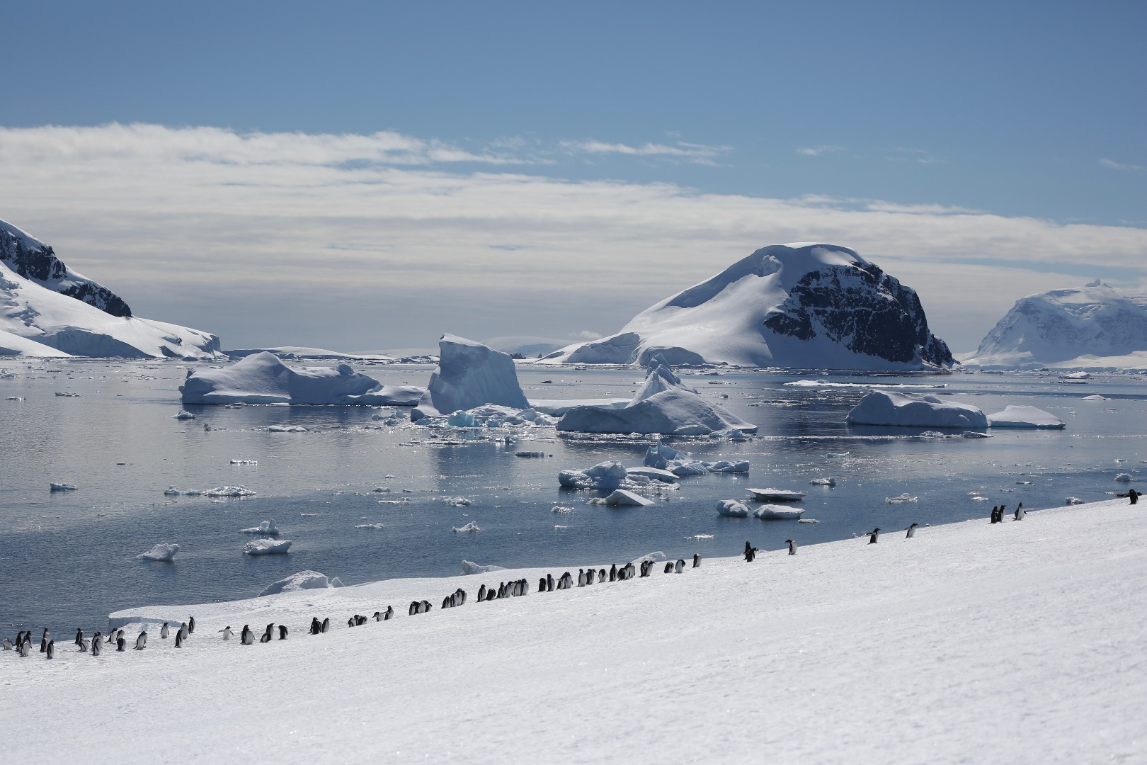 Typical antartica peninsula with penguins and icebergs