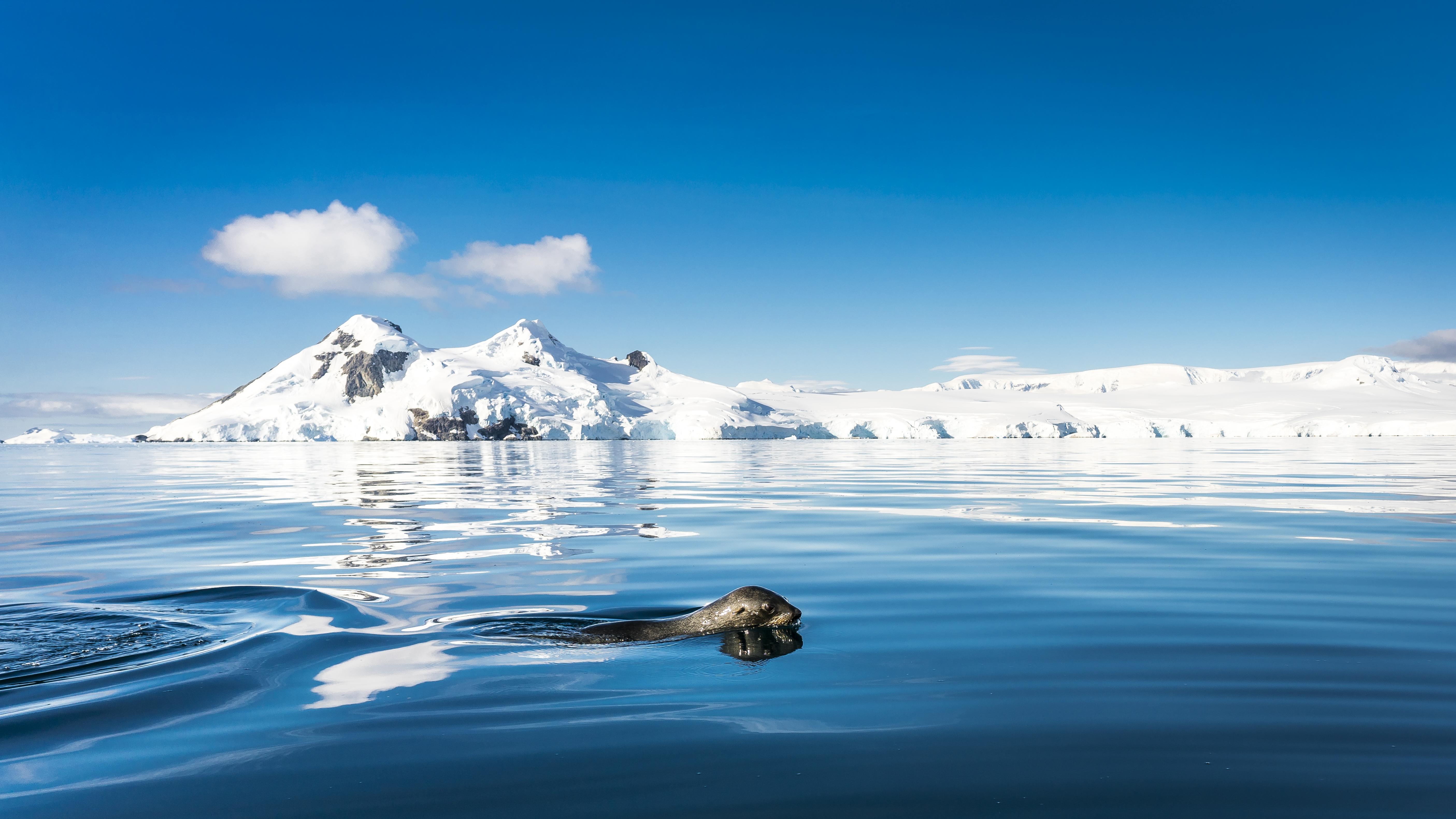 Falklands, South Georgia, Ant Peninsula © Fotografie Dietmar Denger-Oceanwide Expeditions276.jpg