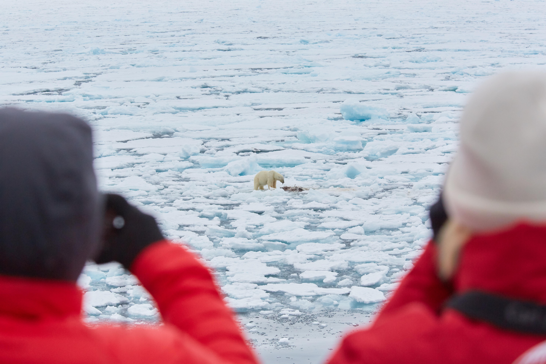 North Spitsbergen Polar Bear Special, June © Markus Eichenberger-Oceanwide Expeditions (31) (1).jpg