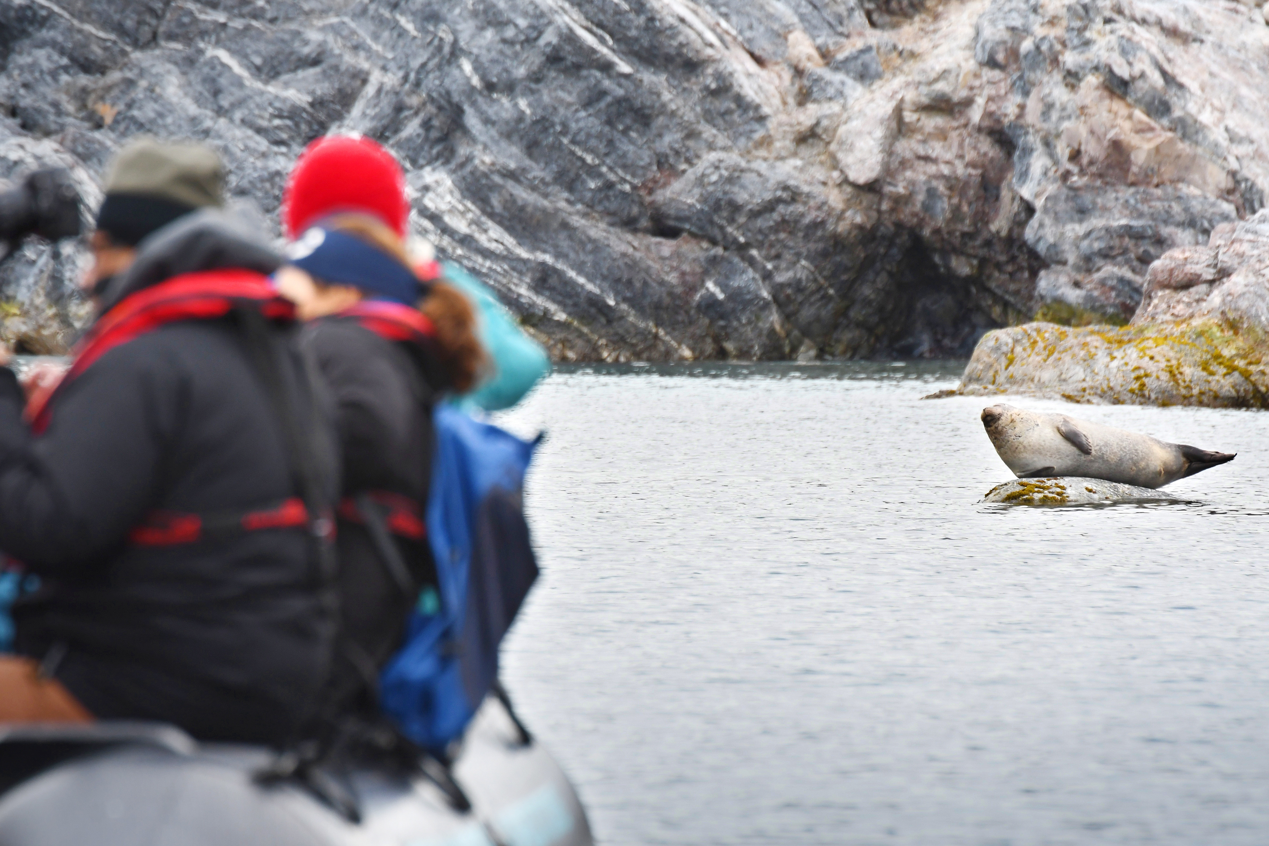Ny Alesund; harbor seal; zodiac; Svalbard-aug2017-Geert_Kroes-008.jpg