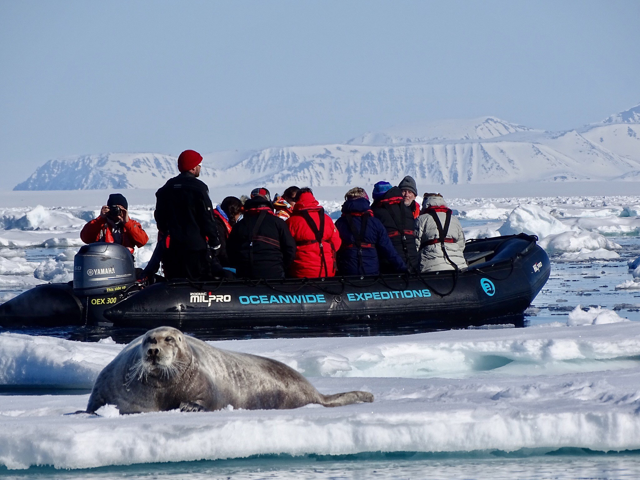 Bearded seal, Zodiac cruising, Svalbard, Juli © Nikki Born-Oceanwide Expeditions.jpg