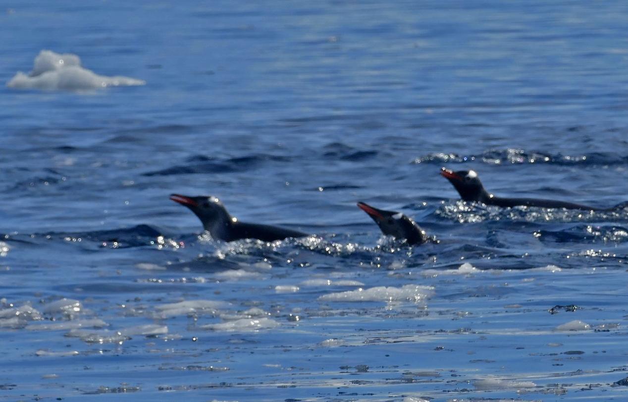 Jumping Penguins