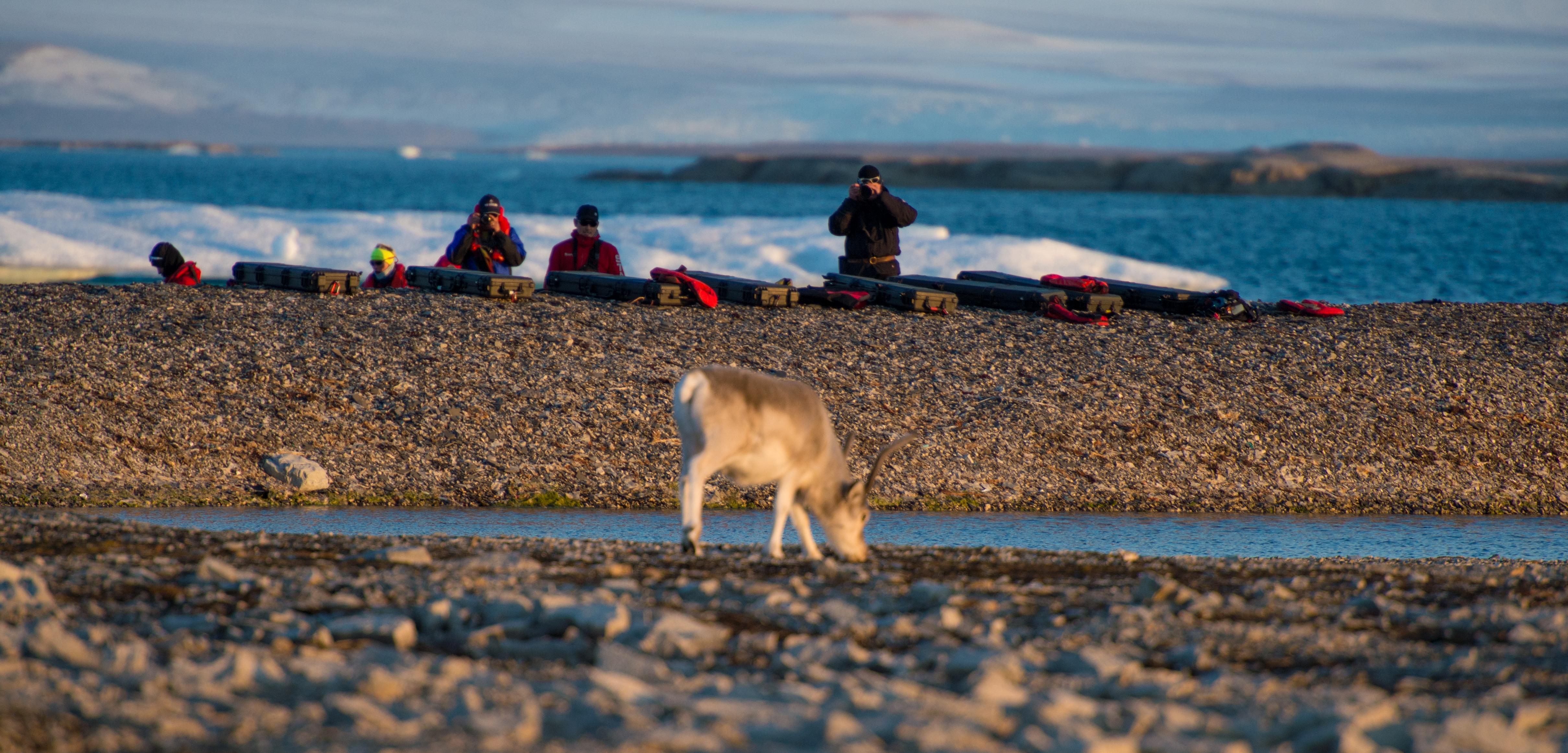 Around Spitsbergen, Kvitoya, August © Zoutfotografie-Oceanwide Expeditions (209) - kopie.JPG