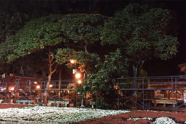 Cae árbol de 350 kilos sobre banca del zócalo de Atlixco