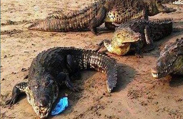Hallan el cuerpo de niño de 2 años arrastrado por un caimán