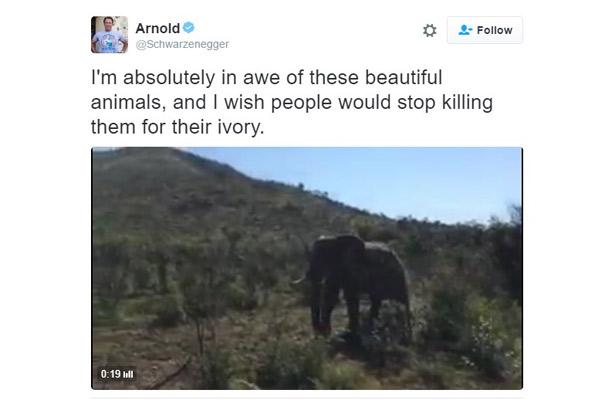 Un elefante contra el actor Arnold Schwarzenegger