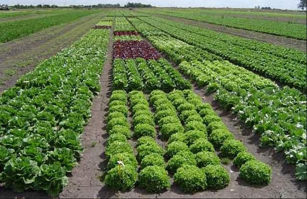Bioestimulación con láser opción para mejorar la agricultura