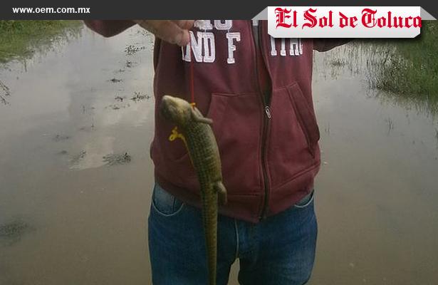 Encuentran reptiles en casas inundadas de Toluca