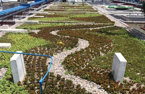 Habilita SEDESA más hospitales con azoteas verdes
