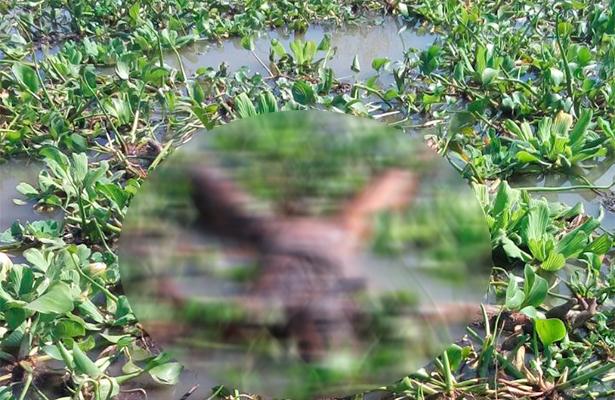 Al menos 11 cuerpos habrían sido encontrados en los límites de Jalisco y Michoacán