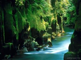 Whirinaki Forest, Napier