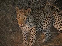 Sydafrika 2009