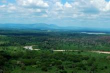 Fern in Tanzania