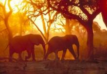 Anne i Afrika