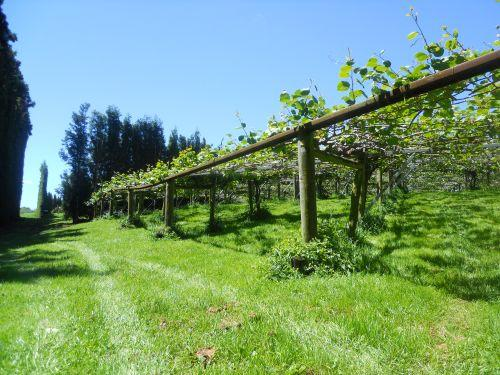 kiwi planter rikkes eventyr. Black Bedroom Furniture Sets. Home Design Ideas