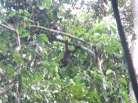 En la Selva con Primates Peru