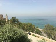 Alexandrian Forum Study Tours