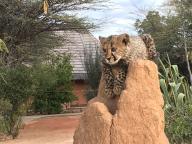 Ali's Namibian Adventure
