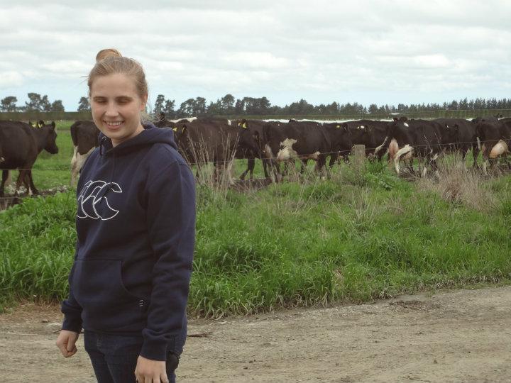 Så er det malke tid og alle køerne er ved at blive hentet ind fra marken | Landbrugsarbejde og ...