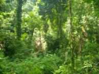 Jet Setting and Jungle Trekking - The adventures o