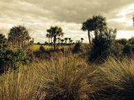 South  Florida Golf Vacation