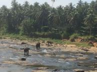 Familien Næsborg på Sri Lanka