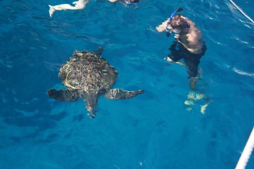 Henke och en skoldpadda