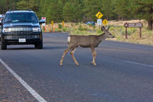 Hold up at Bryce Canyon