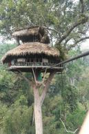 Divaer i junglen