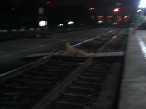 Suicide dog