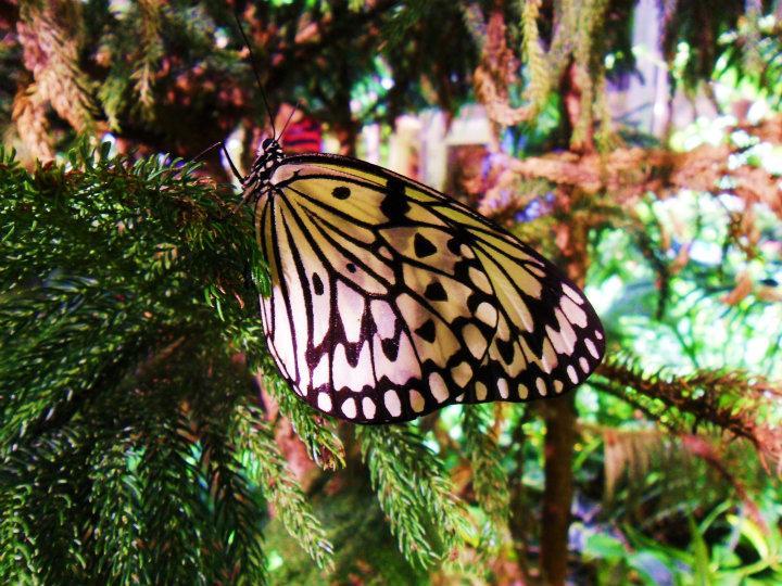 Vlindertuin @Natuurmuseum
