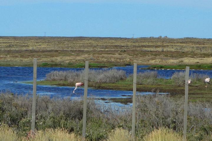 Flamingo's onderweg naar Seno Otway