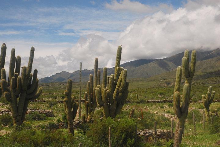 De woestijn van de Salta-provincie