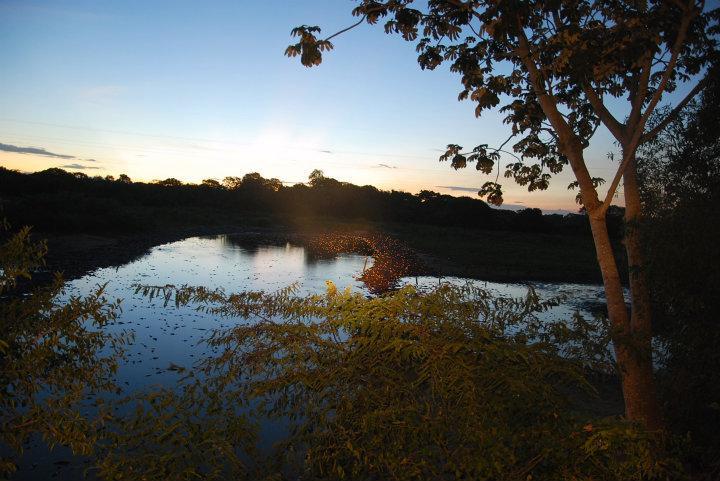 De gloed van kaaimanogen die het licht weerkaatsen