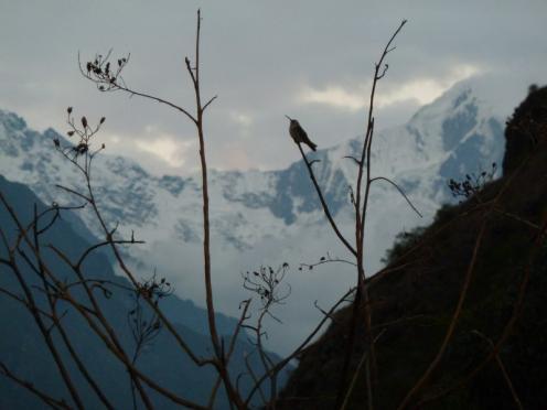 Kolibrie en gletsjer