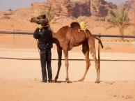 Helen's Silk Road